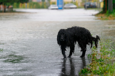 Lost wet dog